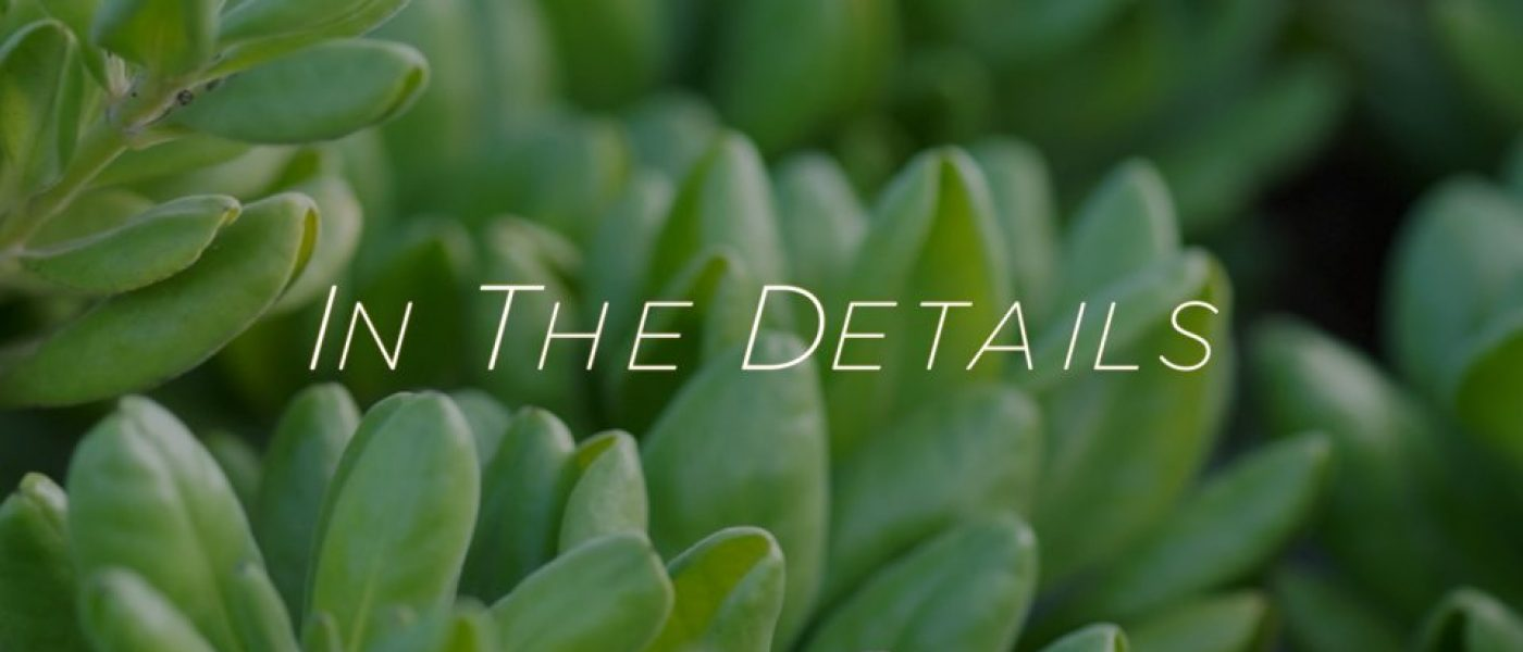 InTheDetails